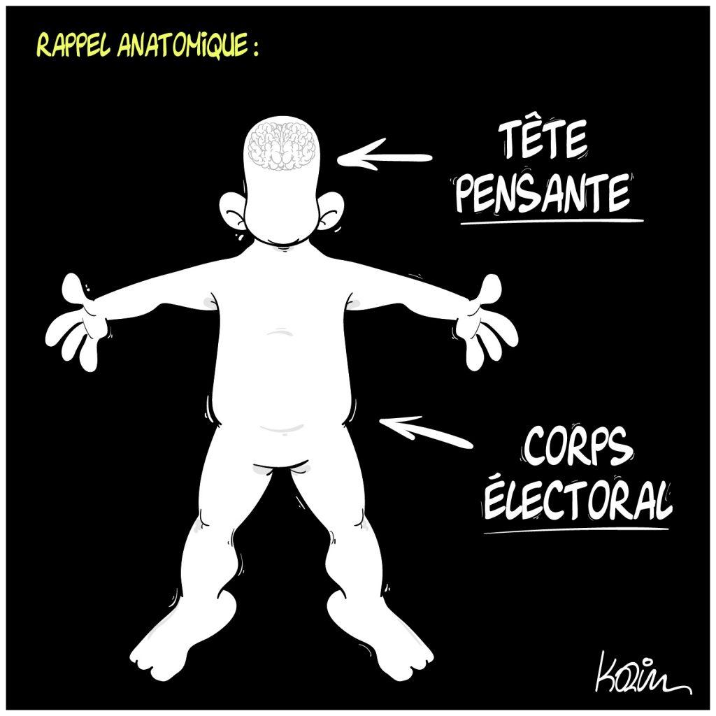 dessin presse humour anatomie élections image drôle tête pensante