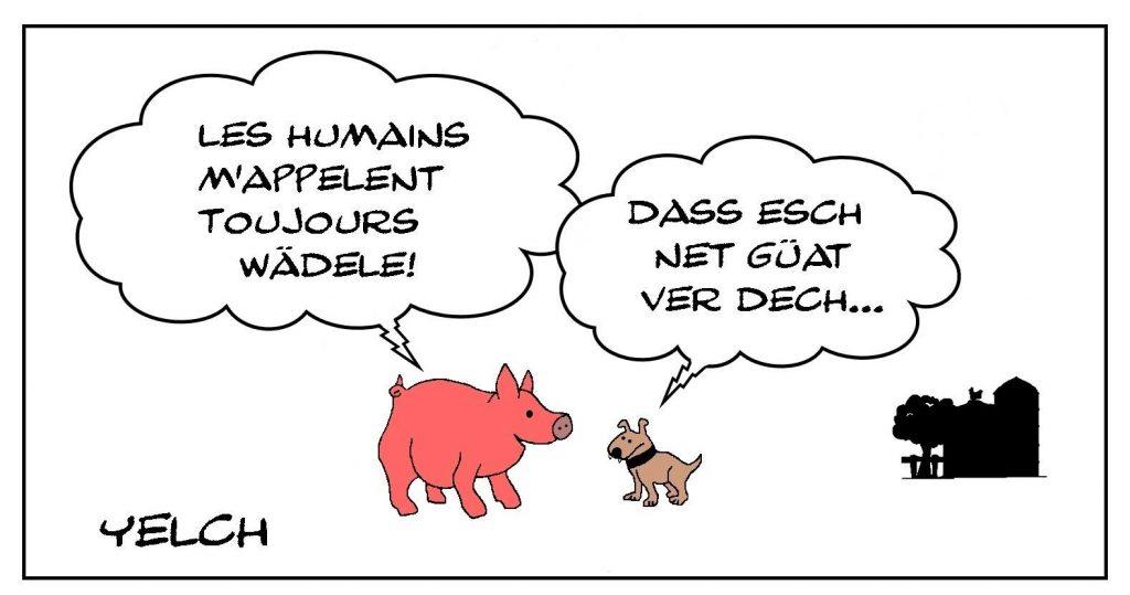dessin presse humour Seppi chien alsacien image drôle Alsace cochon jambonneau