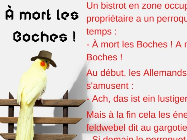 humour blague perroquet allemands seconde guerre mondiale