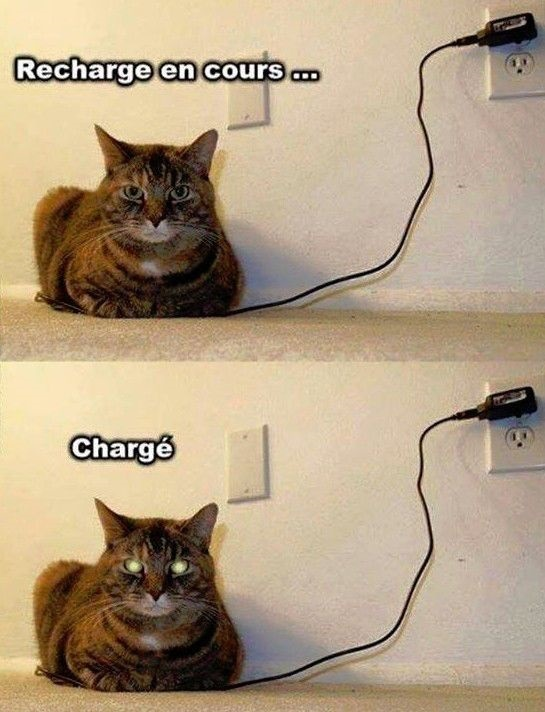 dessin humour chat rechargement image drôle chargeur