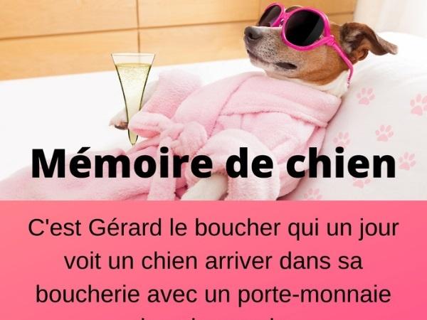 humour, blague sur la mémoire, blague sur le commerce, blague sur les bouchers, blague sur les chiens, blague sur les oublis, blague sur l'intelligence