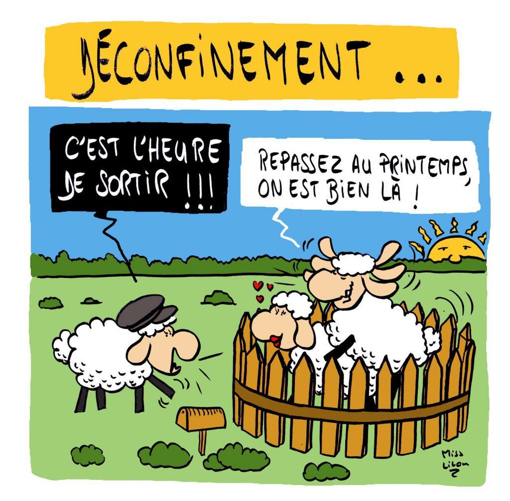dessin presse humour coronavirus confinement image drôle mouton déconfinement