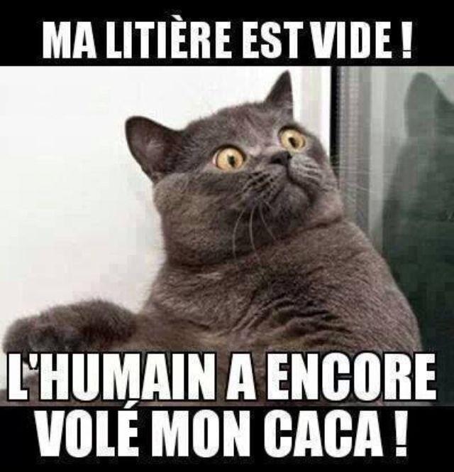 dessin humour chat litière image drôle humain vol caca