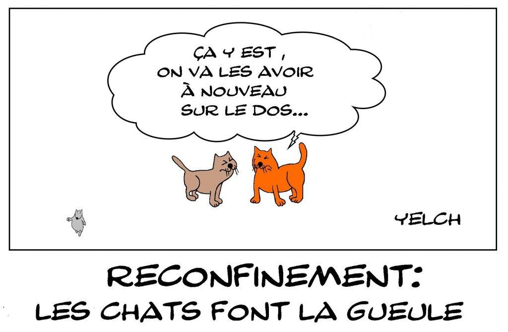 dessins humour coronavirus confinement image drôle chats reconfinement