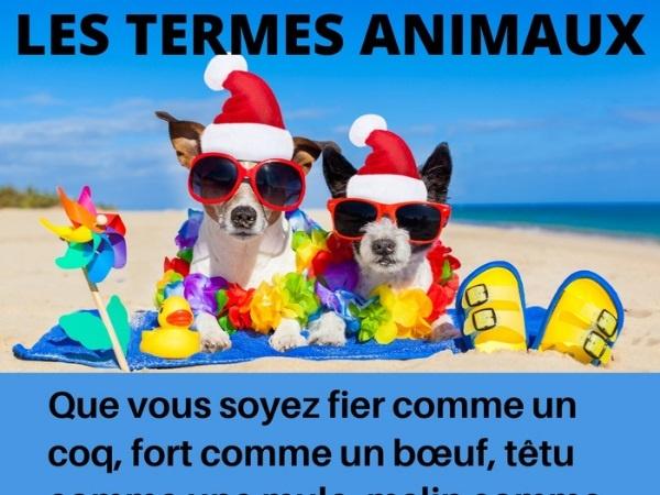 humour, blague sur les animaux, blague sur les expressions, blague sur le langage, blague sur les termes, blague sur les expressions animalières, blague sur le monde animal