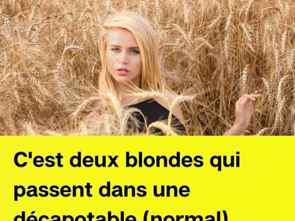 humour, blague sur les blondes, blague sur le blé, blague sur les champs de blé, blague sur la natation, blague sur les barques, blague sur les rames