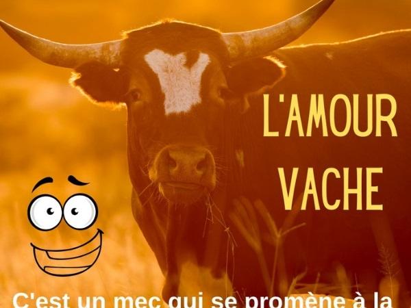 humour, blague sur les taureaux, blague sur les petites filles, blague sur les vaches, blague sur les paysans, blague sur la zoophilie, blague sur la reproduction