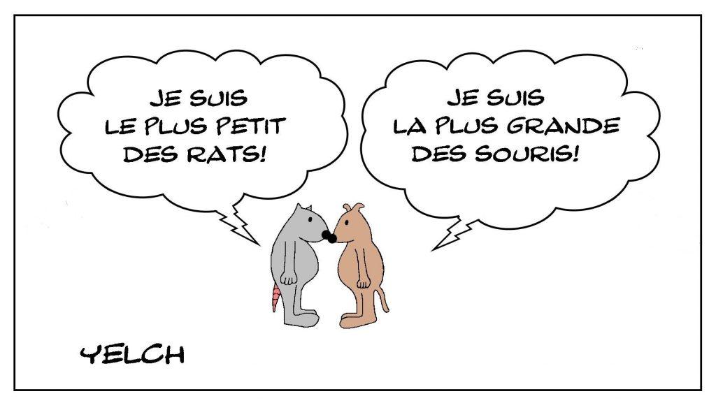 dessins humour rats souris taille image drôle petit rat grande souris
