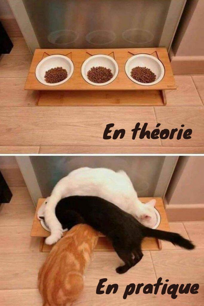 dessin humour chats image drôle théorie pratique