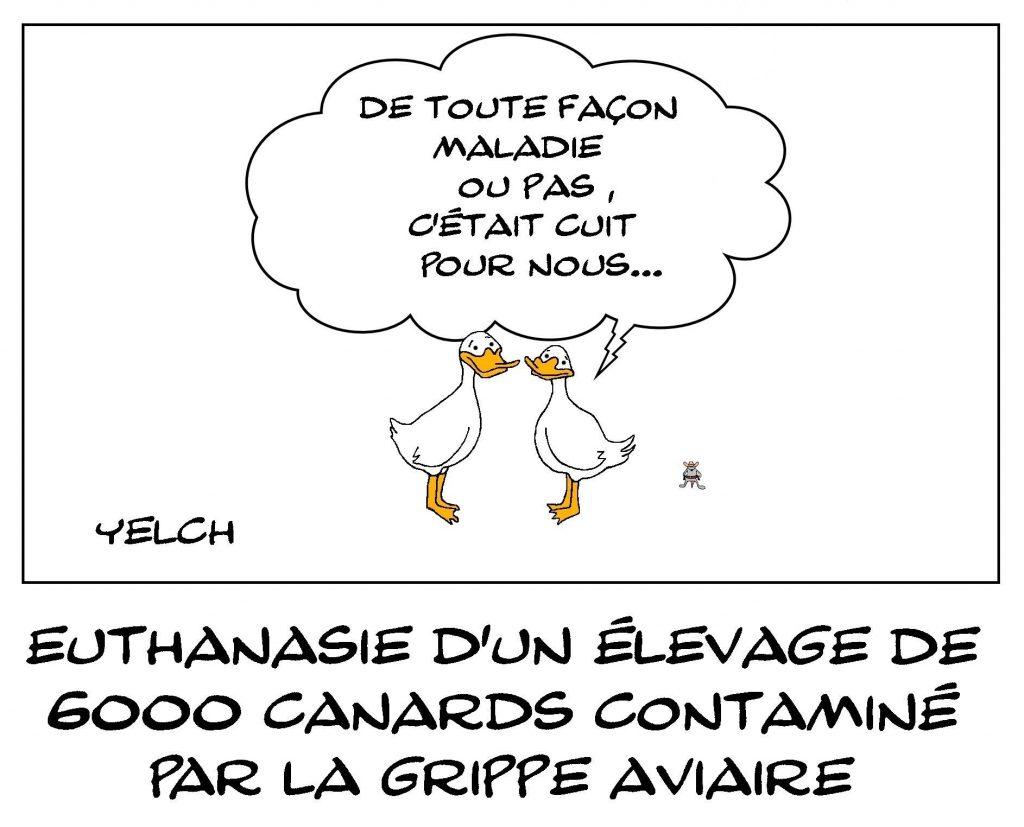 dessins humour élevage canards image drôle grippe aviaire