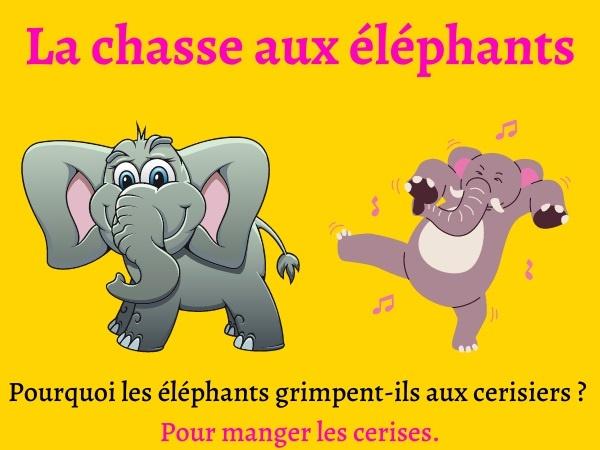 humour, blague animaux, blague éléphants, blague chasse, blague cerises, blague cerisiers, blague couilles, blague couleurs