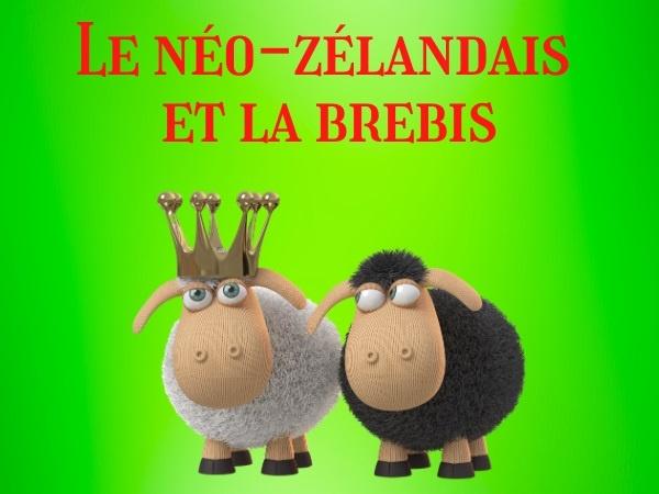 humour, blague néo-zélandais, blague Nouvelle-Zélande, blague zoophiles, blague zoophilie, blague brebis, blague tribunal, blague fellations, blague jurés