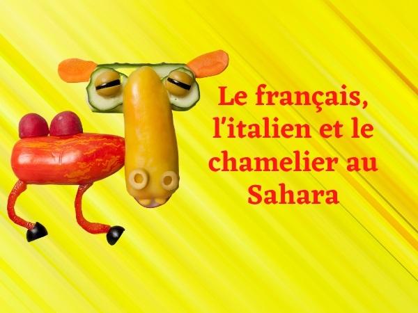 humour, blague sur les chameaux, blague sur le Sahara, blague sur les chameliers, blague sur la zoophilie, blague sur les français, blague sur les italiens