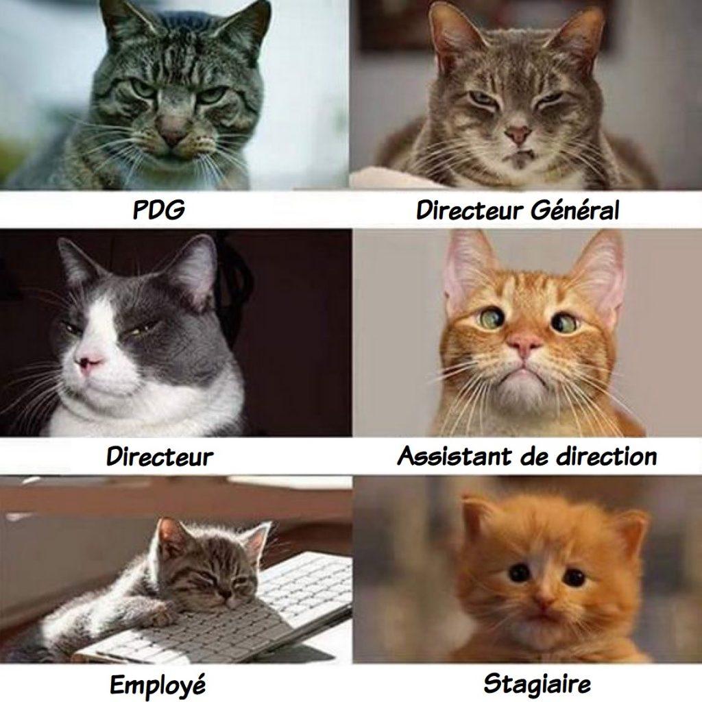dessin humour chats image drôle hiérarchie entreprise