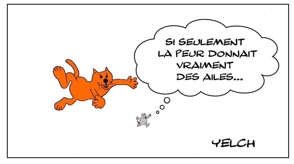 dessins humour chat rat image drôle peur ailes