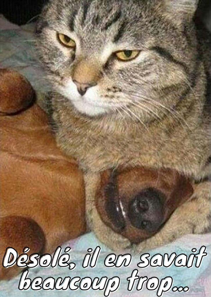 dessin humour chat chien image drôle témoin gênant meurtre