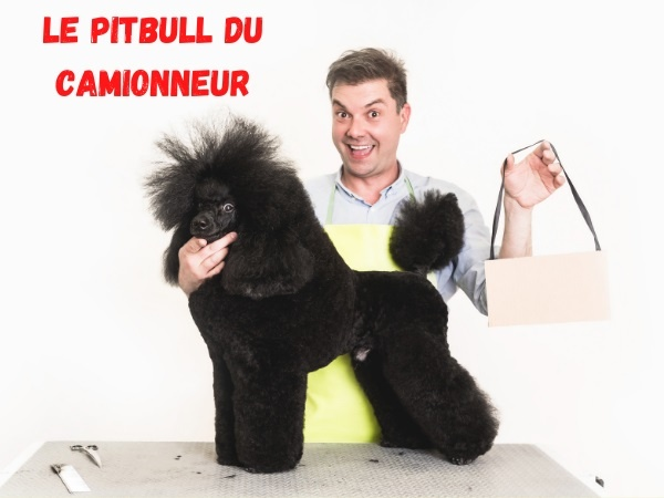 humour, blague pitbulls, blague caniches,blague animaux, blague chiens, blague violence, blague routiers