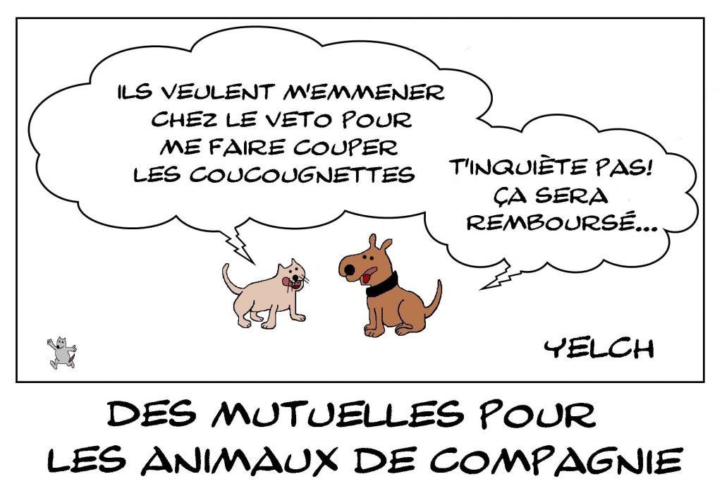 dessins humour animaux compagnie image drôle assurance mutuelle