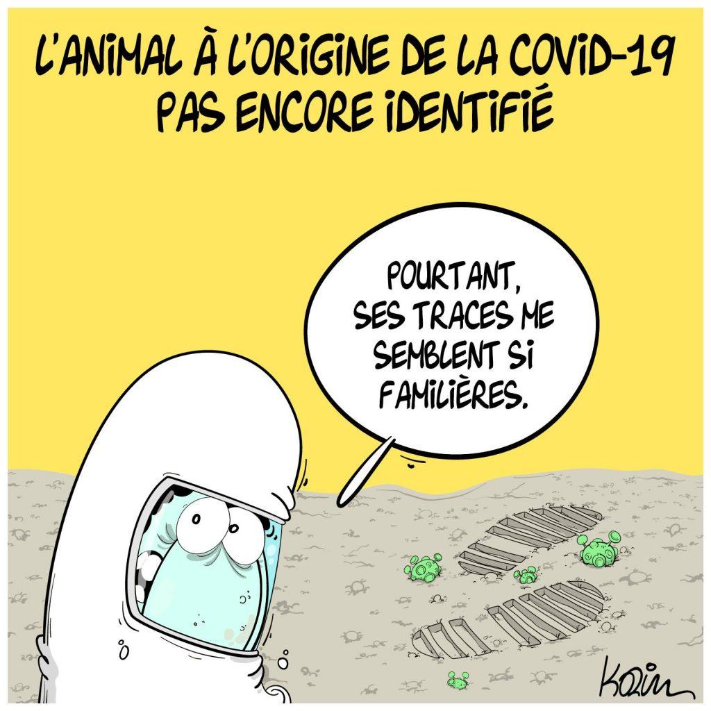 dessin presse humour coronavirus covid-19 image drôle origine animal identification