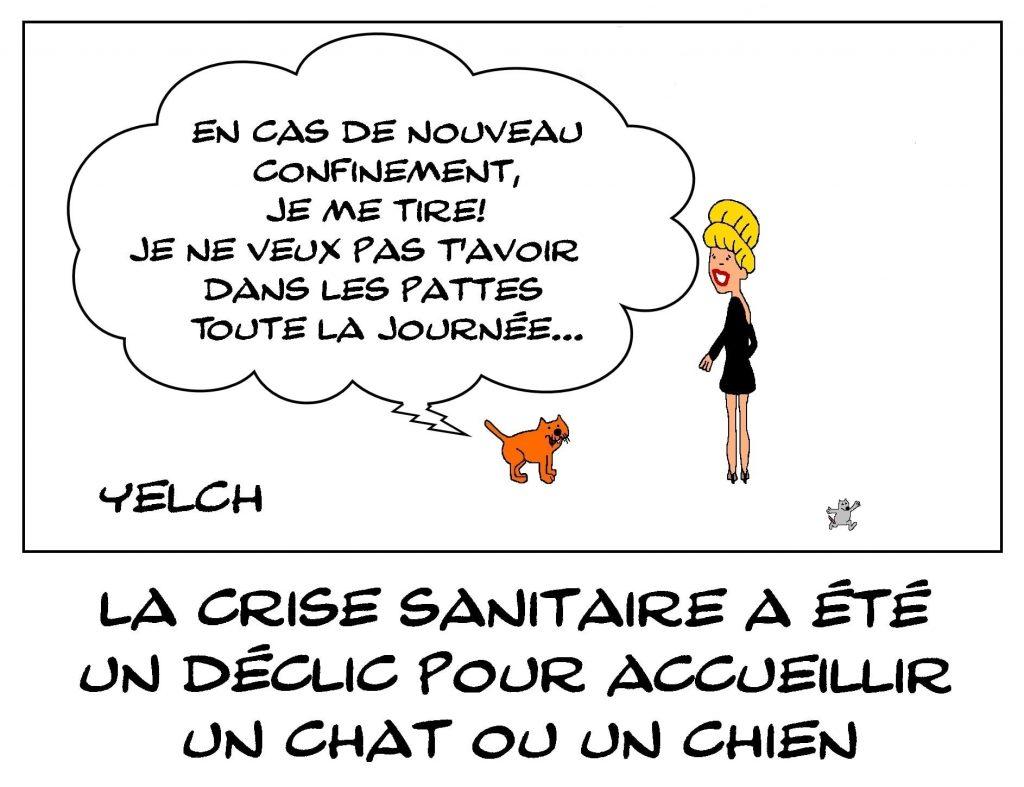 dessins humour coronavirus covid-19 image drôle crise sanitaire adoption animaux