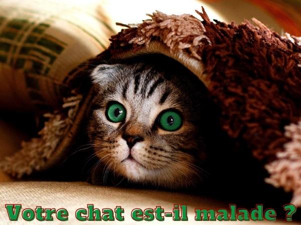 humour, blague chats, blague félins, blague santé, blague maladies, blague siestes, blague animaux