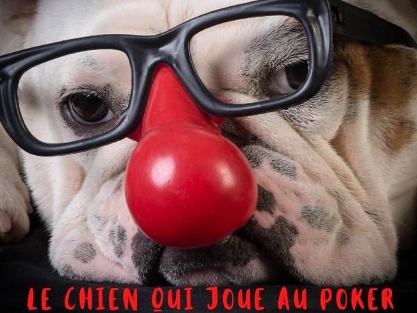 humour, blague gars, blague bar, blague poker, blague joueur de poker, blague table, blague chien, blague chien savant, blague queue, blague remuer la queue, blague bon jeu, blague bluff, blague animaux