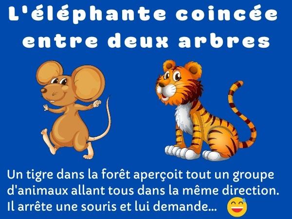 blague éléphant, blague souris, blague tigre, blague sexe, blague animaux, blague baise, humour