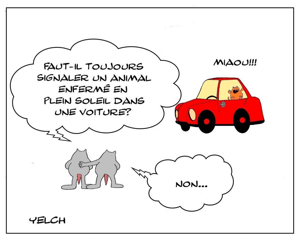 dessins humour animal voiture image drôle signalement enfermement soleil
