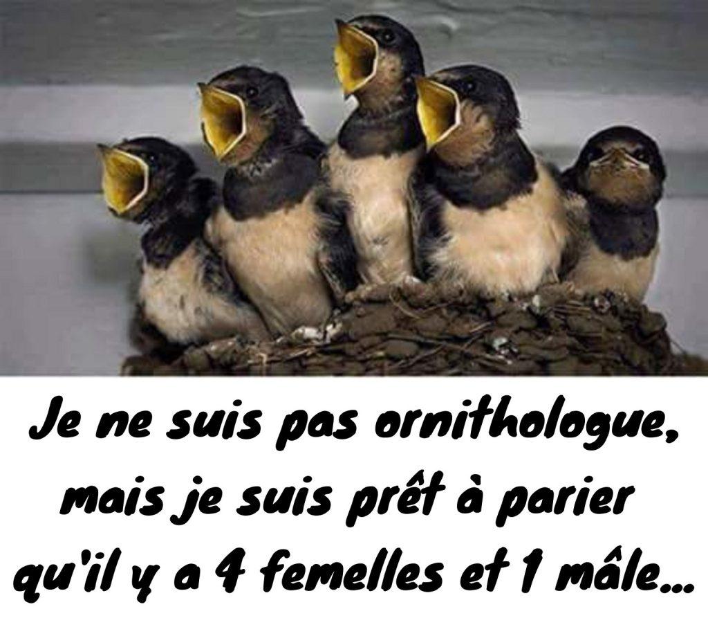dessin humour nid oisillons image drôle genre oiseaux mâles femelles