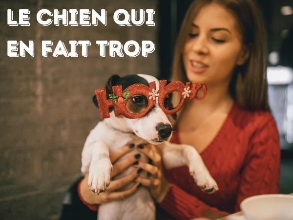 blague chiens, blague dressage, blague gamelle, blague télécommande, blague laisse, blague intelligence, blague balle, humour