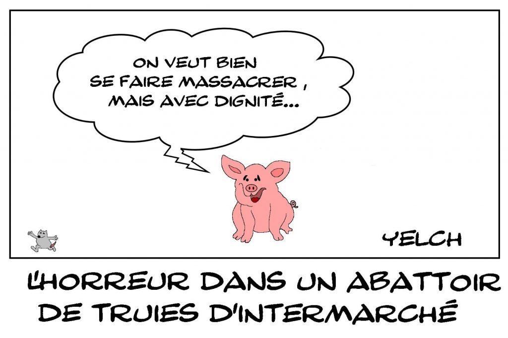 dessins humour association L214 Finistère image drôle abattoir truies Intermarché