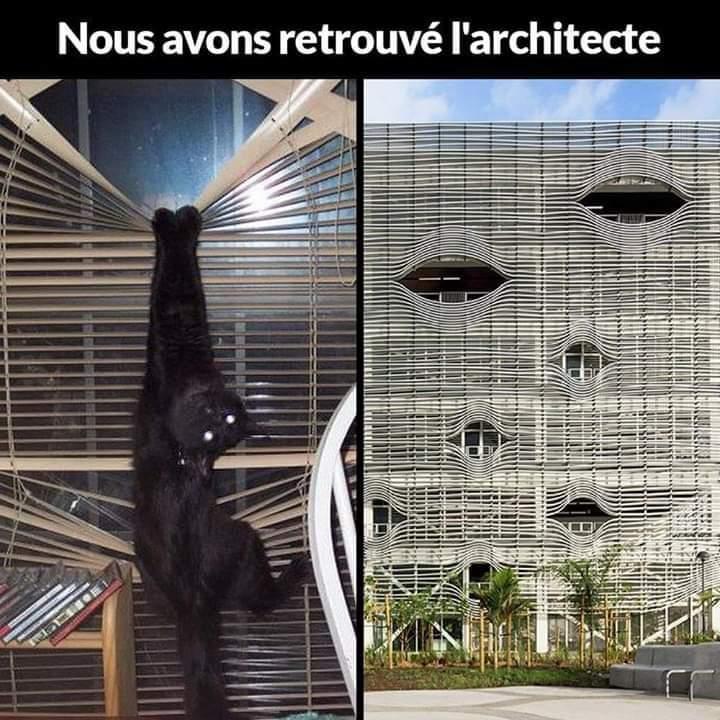 dessin humour image chat store vénitien architecture architecte