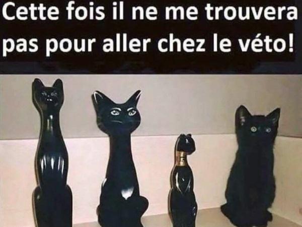dessin humour chat noir image drôle cachette statue vétérinaire