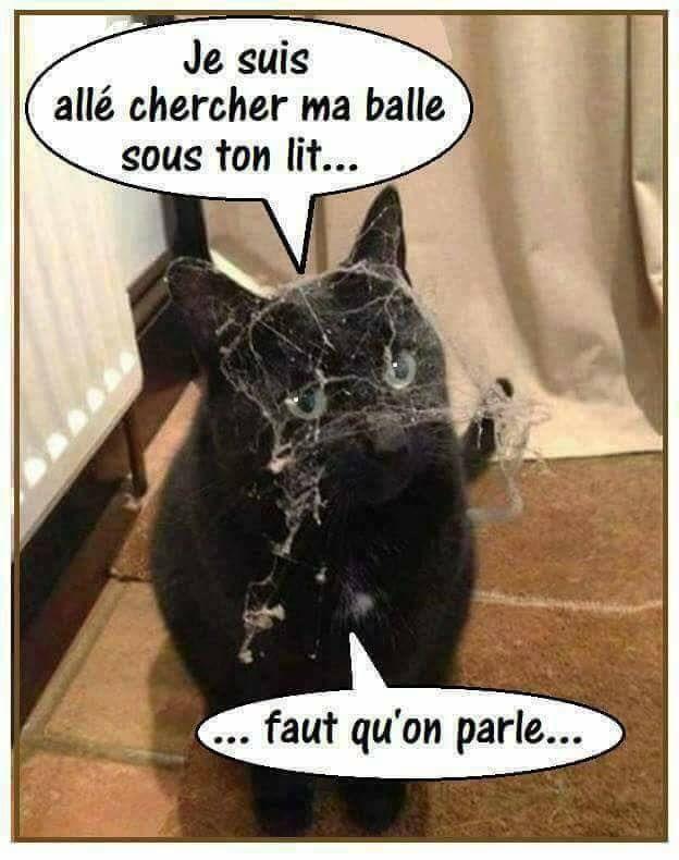 dessin humour chat balle image drôle lit ménage toile d'araignée