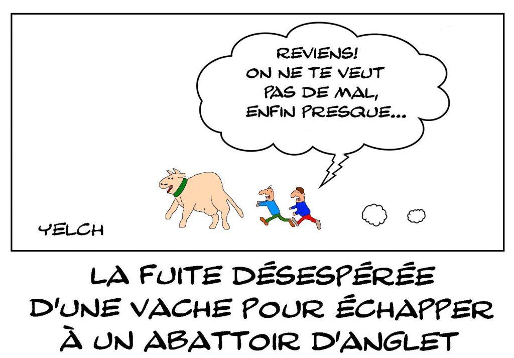 dessins humour fuite vache image drôle abattoir Anglet