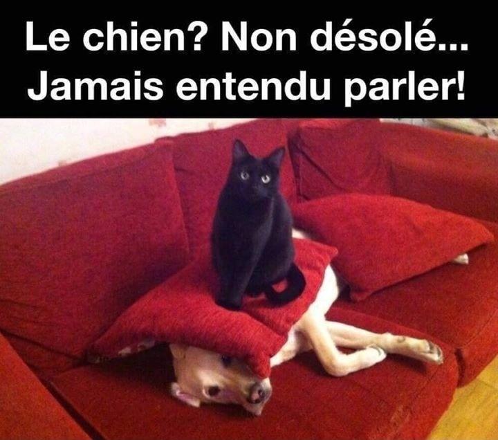 dessin humour chat noir image drôle chien dissimulation coussin
