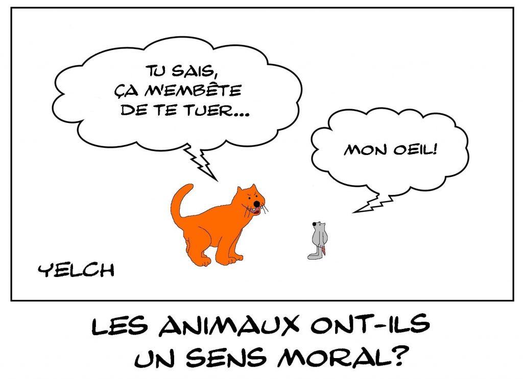dessins humour animaux chat image drôle sens moral